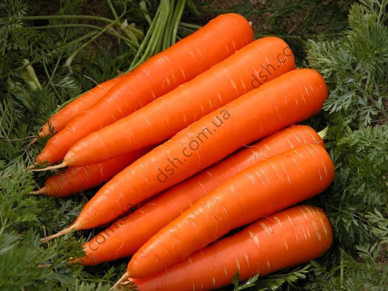 Морква Скарла 3г (Clause) ТМ Добрі Сходи
