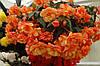Бегонія бульбова Іллюмінейшн F1, помаранчева 5шт (Веnary) ТМ Добрі Сходи