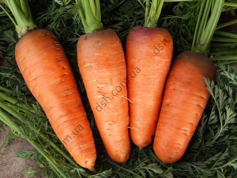 Морква Болтекс 2г (Clause) ТМ Добрі Сходи