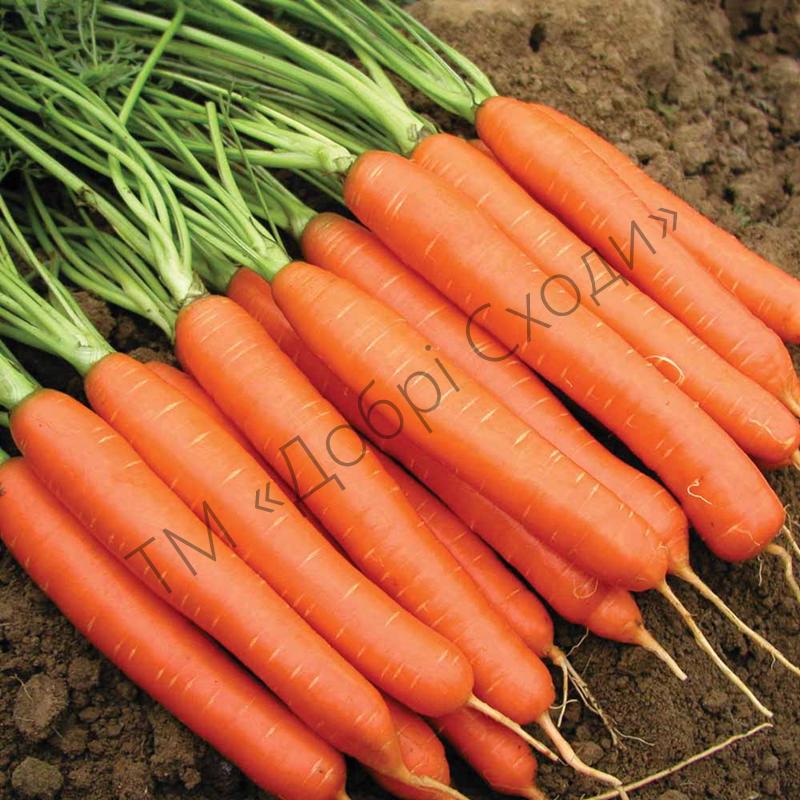 Морква Роял Форто 1г (Seminis) ТМ Добрі Сходи