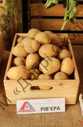 Картопля Рів'єра 1кг (1 РП) (Агріко) ТМ Добрі Сходи, фото 1