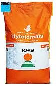 Семена кукурузы КВС 2370