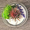 Флорариум с тилландсией Ионантой Рэд, фото 2