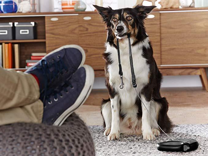 Поводок для собак ZOOFARI с светодиодным шнуром, 8 м.