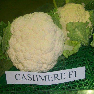 Семена цветной капусты Кашмир F1 ( 1000 сем.) Sakata