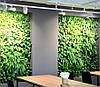 Фитомодули и фитостены в Днепре, вертикальное озеленение стен, фото 2