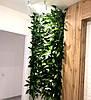 Фитомодули и фитостены в Днепре, вертикальное озеленение стен, фото 3