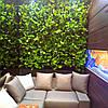 Фитомодули и фитостены в Днепре, вертикальное озеленение стен, фото 4