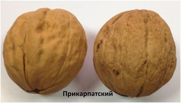 """Грецкий орех """"Прикарпатский"""" 3 года"""