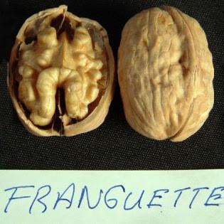 Волоський горіх Franquette (Франкет) Франція 2 роки