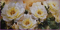 """Фотообои  """"чайная роза""""  Prestige №31   для гостиной , спальни   392*204  12 листов"""