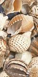 Плитка облицювальна для ванних кімнат Sea Breeze Shells бежевий, фото 4