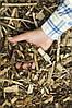 Измельчитель садовый Sadko GS-2800 (без бункера), фото 2