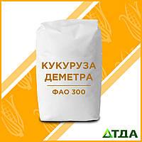 Семена кукурузы - гибрид Деметра (ФАО 300)