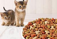 Сухой корм для кошек