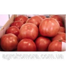 ТС 02-0082 F1 / TS 02-0082 F1 томат рожевий індет 250 нас, Solare Sementi (Італія)