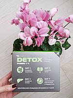 DETOX программа - очистка всего организма Detox