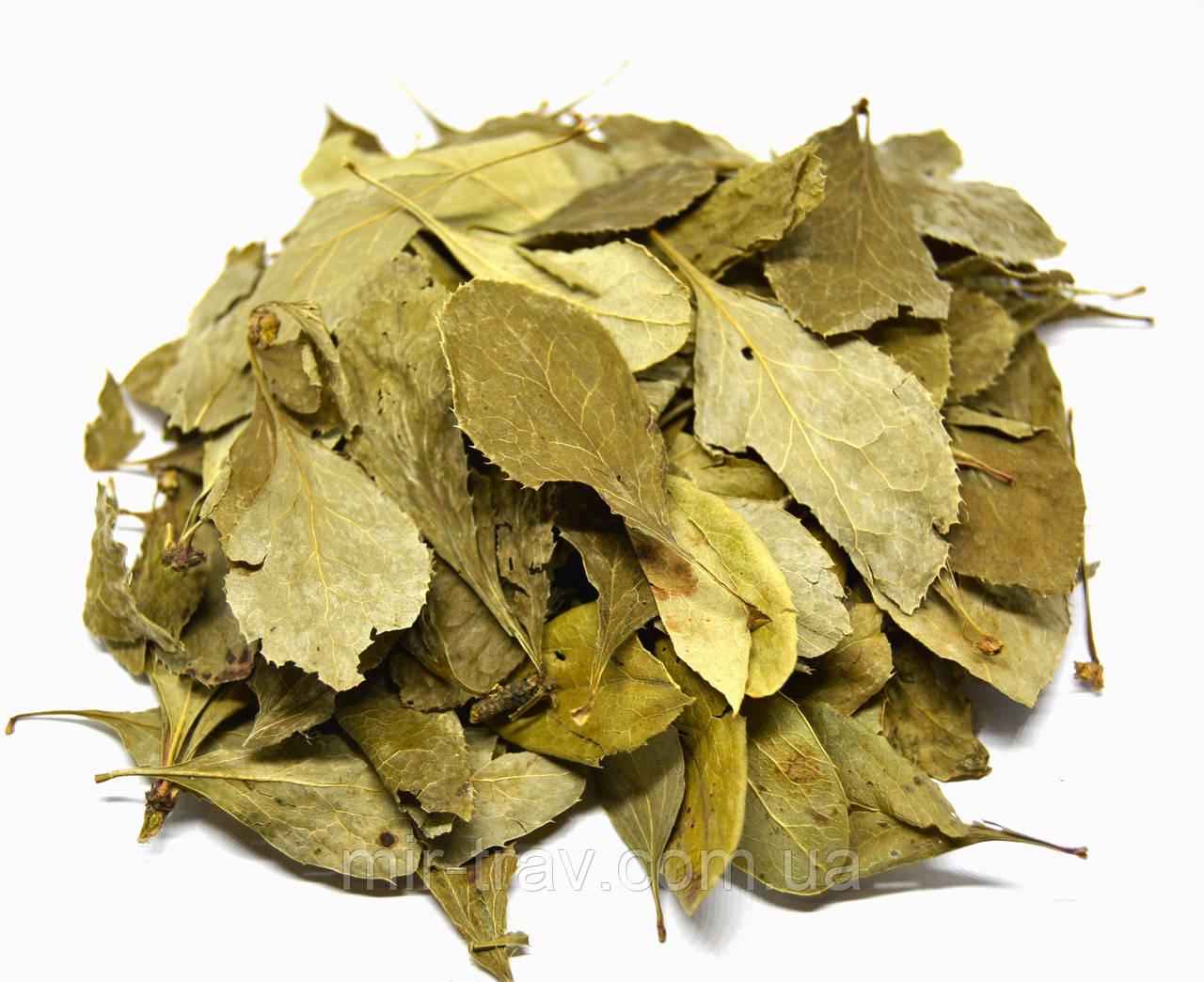 Барбарис обыкновенный лист