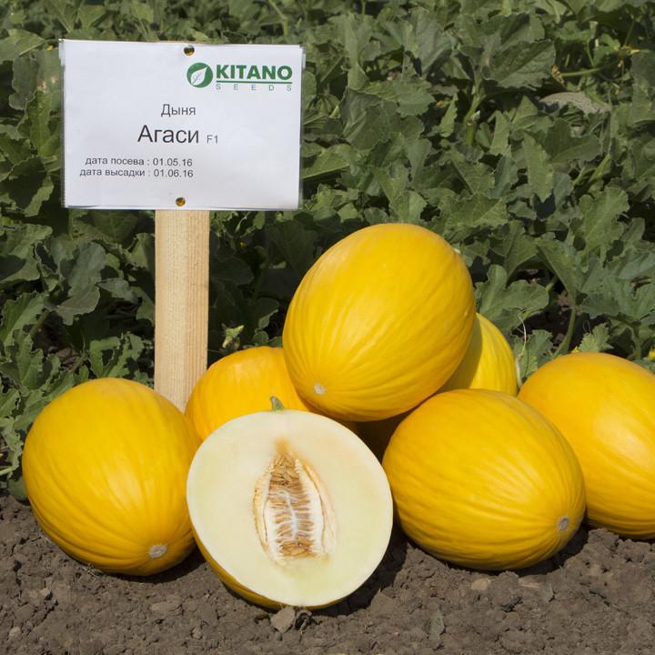 Семена дыни Агаси F1, Kitano 1 000 семян | профессиональные