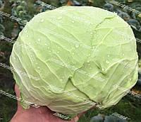Оригами F1 семена капусты б/к среднеспелой 2 500 семян