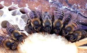 Соевая мука 1 кг для подкормки пчел.