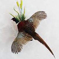 Чучела уток, голубей подсадных