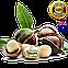 Макадамия высший сорт (Австралия) вес: 150 гр, фото 2