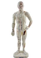 Модель человека с указанием акупунктурных точек 26см.