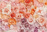 """Фотообои на стену: """"Розы"""", 366х254 см, 8 частей"""
