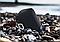 Колонка портативная Ergo BTS-520 3W Original Черный, фото 8