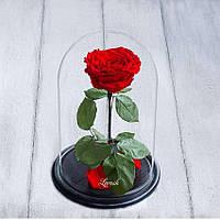 Стабилизированная роза в колбе Lerosh - Lux 33 см, Красная - 138948