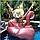 Надувной матрас Modarina Перламутровый Фламинго 150 см Розовый PF3398, фото 4