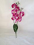 Орхидея  фаленопсис двойная средняя с латексным листьями и корнем 40 см, фото 7