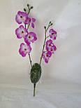 Орхидея  фаленопсис двойная средняя с латексным листьями и корнем 40 см, фото 8