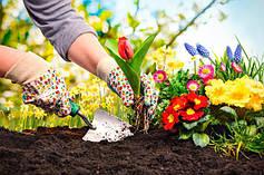 Сад і город