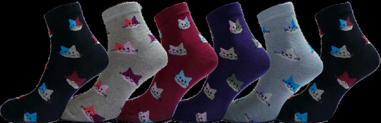 """Жіночі шкарпетки кот """"lomani"""""""