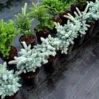 Агроткань от сорняков PP, черная UV, 90 гр/м² размер 1,1м*100м, фото 2