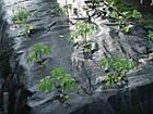 Агроткань от сорняков, черная UV, 90 гр/м² размер 1,6м*100м, фото 3
