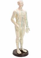 Модель человека с указанием акупунктурных точек 50 см.