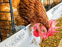 Возможности и ограничения кормовых добавок при сокращении использования антибиотиков