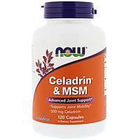 Целадрин і МСМ, Celadrin & MSM, Now Foods, 500 мг, 120 капсул