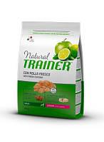 Trainer Natural Junior Maxi (Трейнер) - сухой корм для юниоров больших пород  12 кг