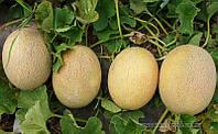 Семена дыни Карамель F1(1000c), фото 1