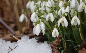 Свято весни краси і прекрасних жінок наступає на п'яти