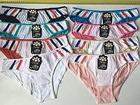 Трусы женские цветные с кантом «Радуга» 46-52 (FE008)