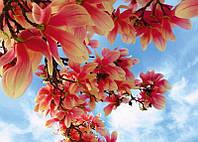 """Фотообои  """" цветы магнолии"""" Prestige №47  для гостиной, спальни, детской и др помещений  272*196"""