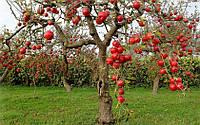 Садовые тонкости: как сажать яблони в весенний период и уход за саженцами