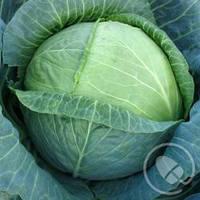 Семена капусты Трансам F1(2500c) поздняя, фото 1