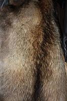 Шкуры шкурки мех енота выделанные