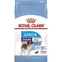 Royal Canin (Роял Канин) Giant Junior Active, корм для щенков собак пород крупных размеров, 15 кг